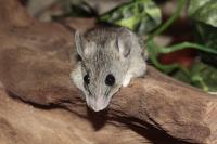 Jak jsem léčila myšku homeopatií